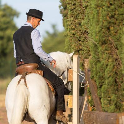2019-Championnat de France - Equitation de travail